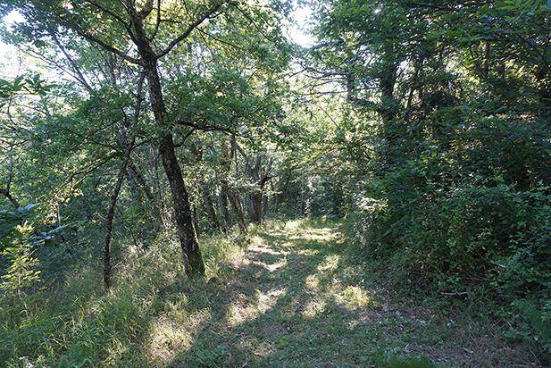 Chemin de Maleval : bien débroussaillé !